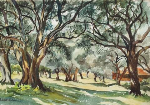 Bois d'oliviers